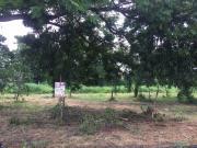 ขายที่ดินเลียบคลองสอง โครงการ Forest Park